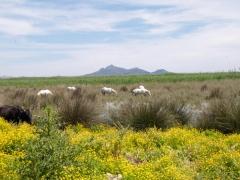 Nationaal-Park-s-Albufera-PICT6663