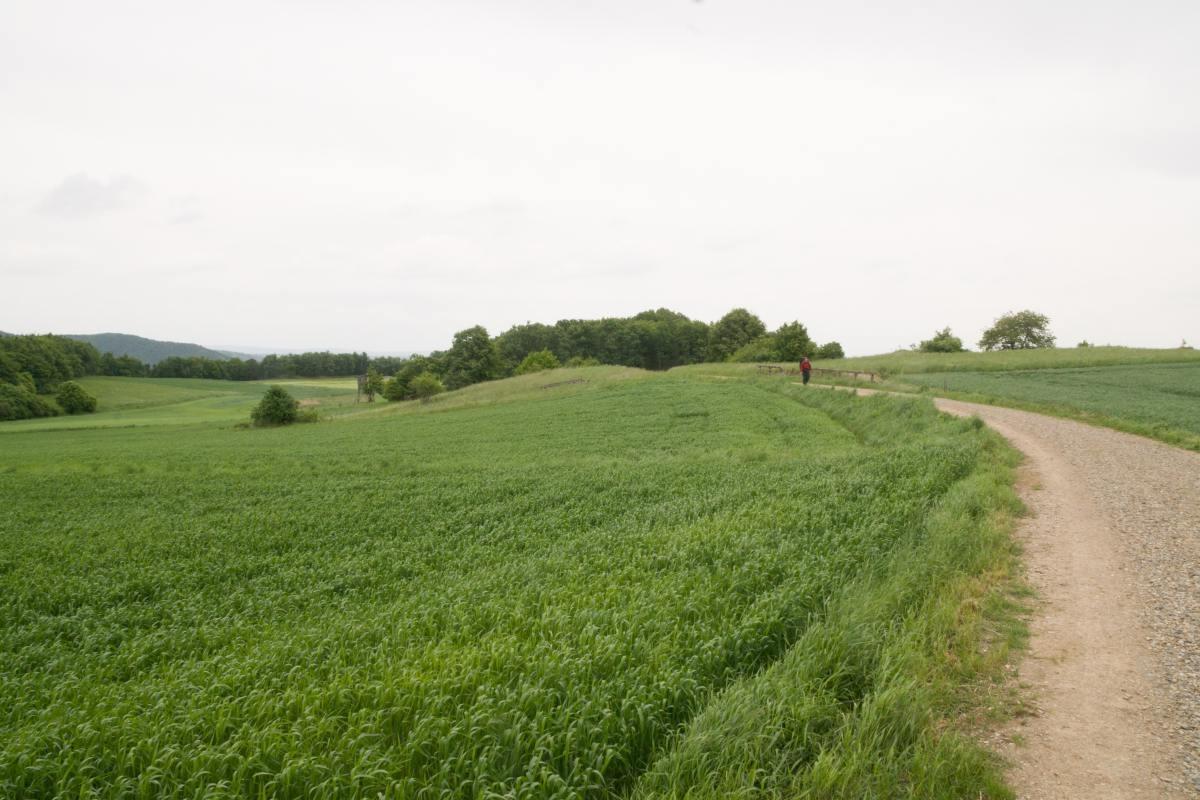 07-onderweg-door-velden-naar-Maria-Langegg