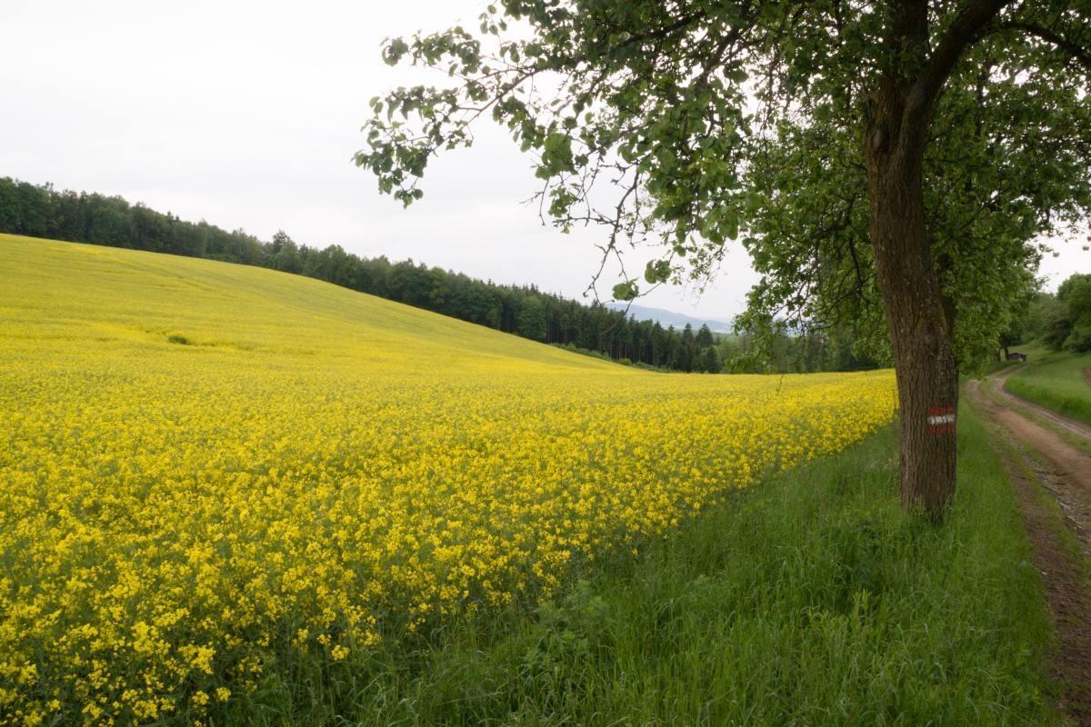 08-bloemenveld-onderweg-naarStift-Melk